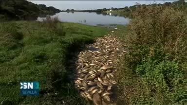 Cientos de peces muertos en pantano
