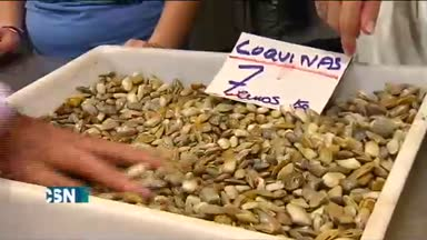 La coquina de Huelva vuelve a los mercados