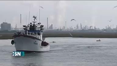 El sector del cerco pide que se paralice la pesca de la sardina