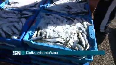 Cierra caladero de sardina