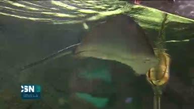 Visita al acuario de Sevilla