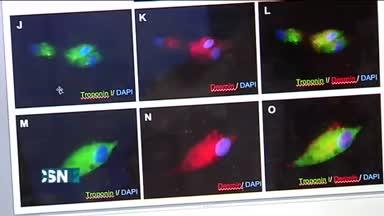 C�lulas sanguineas regeneradas