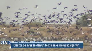 Las aves inundan las marismas del Guadalquivir