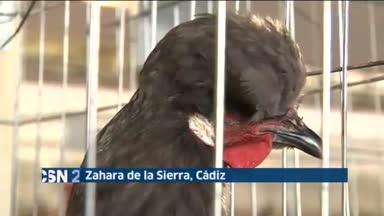 Feria av�cola en Zahara de la Sierra