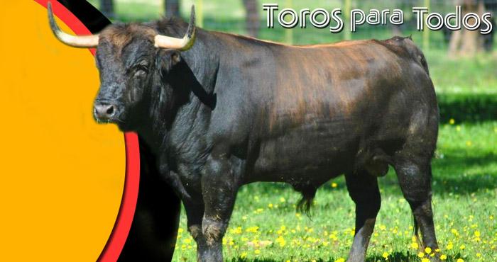 Resultado de imagen de TOROS EN televisión andaluza